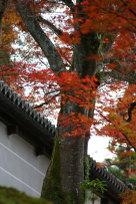 2009kyotoaki_0931