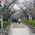 Kamakura063