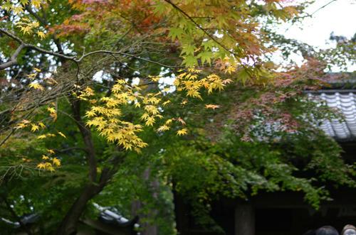 Kamakura001