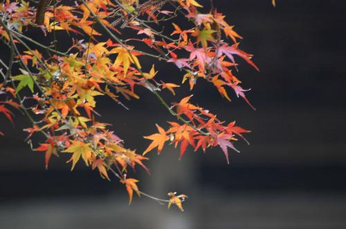 Kamakura005