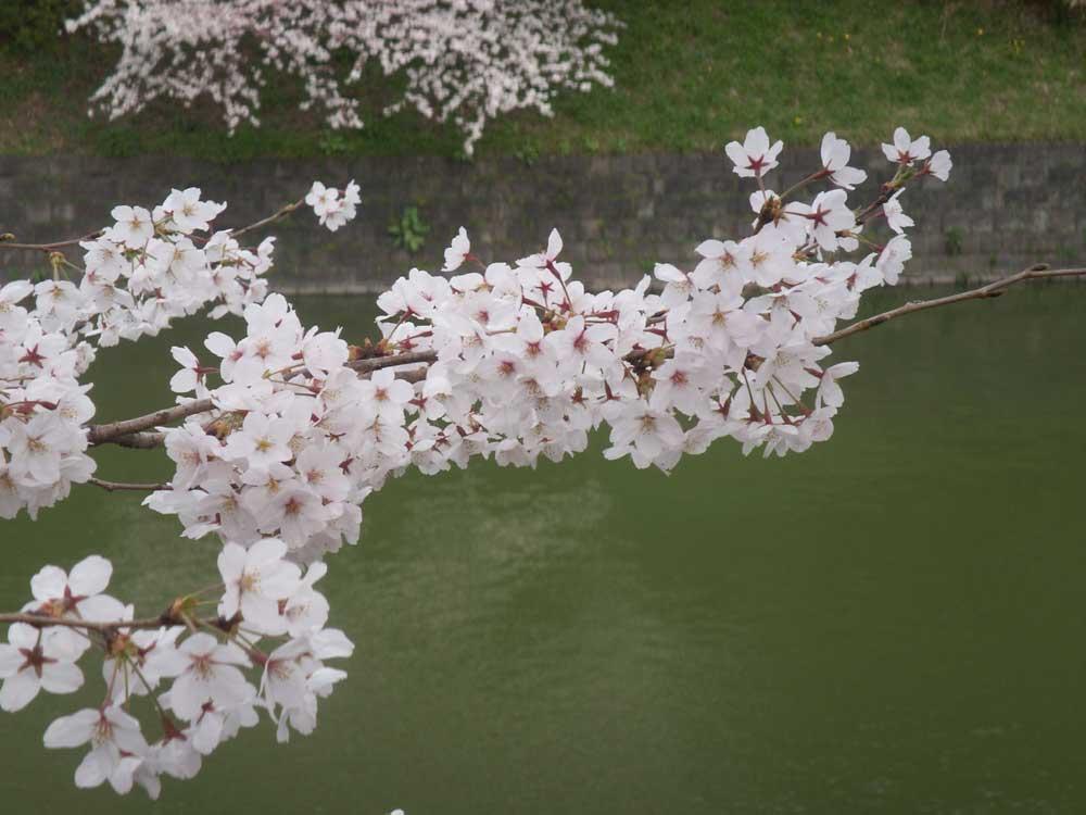 2008yasukuni0091